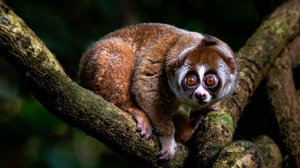 Expedition ins Naturparadies: Mit Regenwald-Experte Dieter Schonlau in den Dschungel Borneos