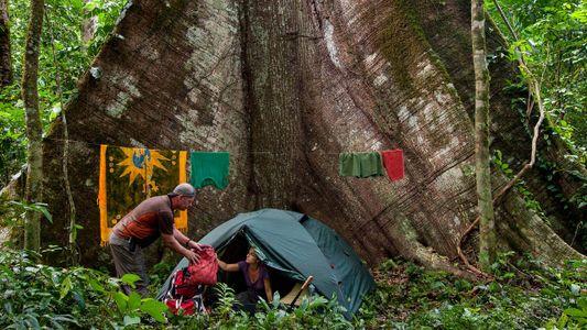 Abenteuer Dschungel: Wie überlebt man im Regenwald?