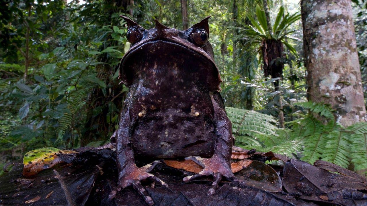 Galerie: Abenteuer Dschungel