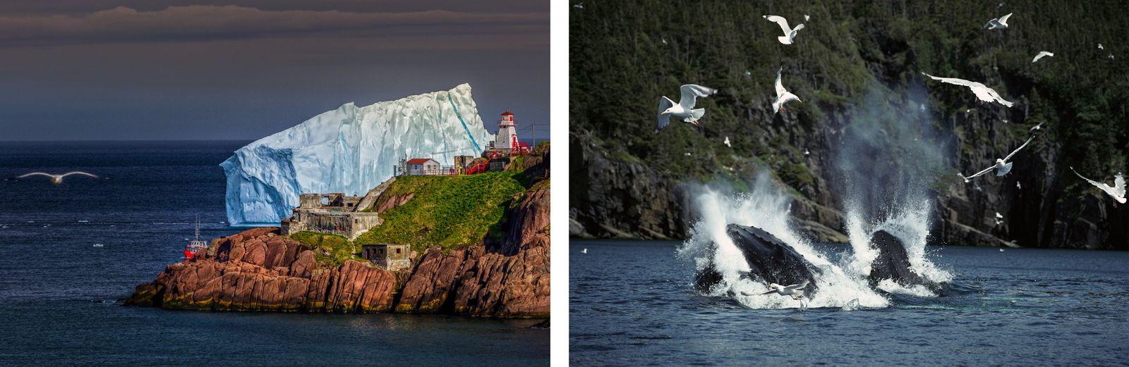 LINKS: Im Frühling brechen riesige, 10.000 Jahre alte Eisberge von den arktischen Gletschern ab und driften ...