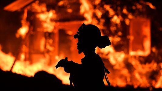Waldbrände: Ursachen und Gefahren für Mensch, Tier und Planet