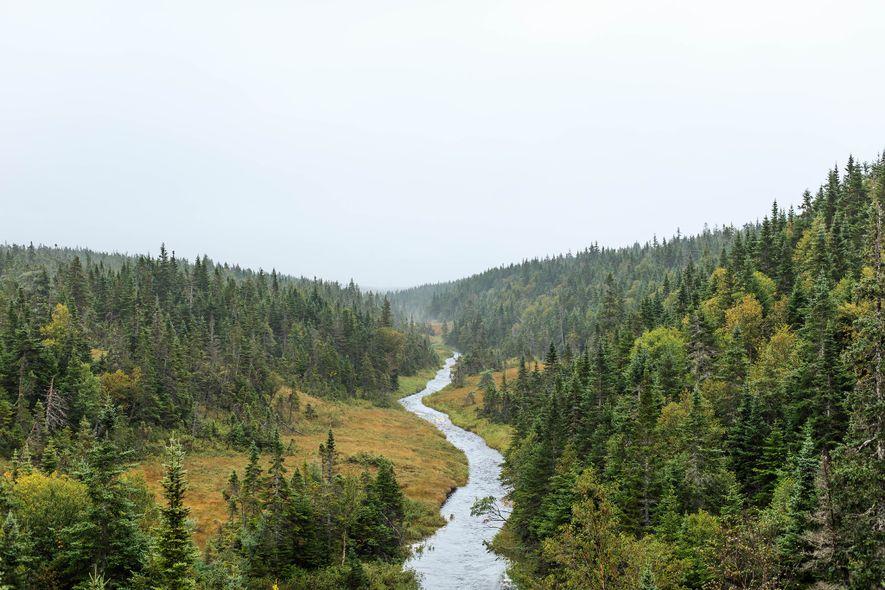 Ein Fluss rauscht durch den grünen Cape-Breton-Highlands-Nationalpark. Obwohl der Park beinahe vollständig von Salzwasser umgeben ist, ...