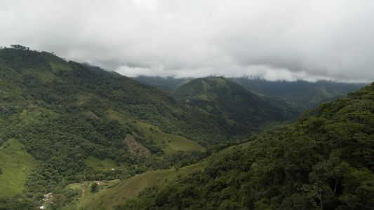 Nach Jahrzehnten des Konflikts kehrt der Kaffee endlich nach Caquetá zurück