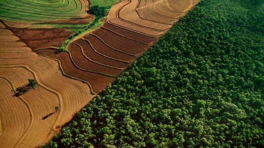 Zauberwort Negativemissionen: Klimarettung auf dem Acker