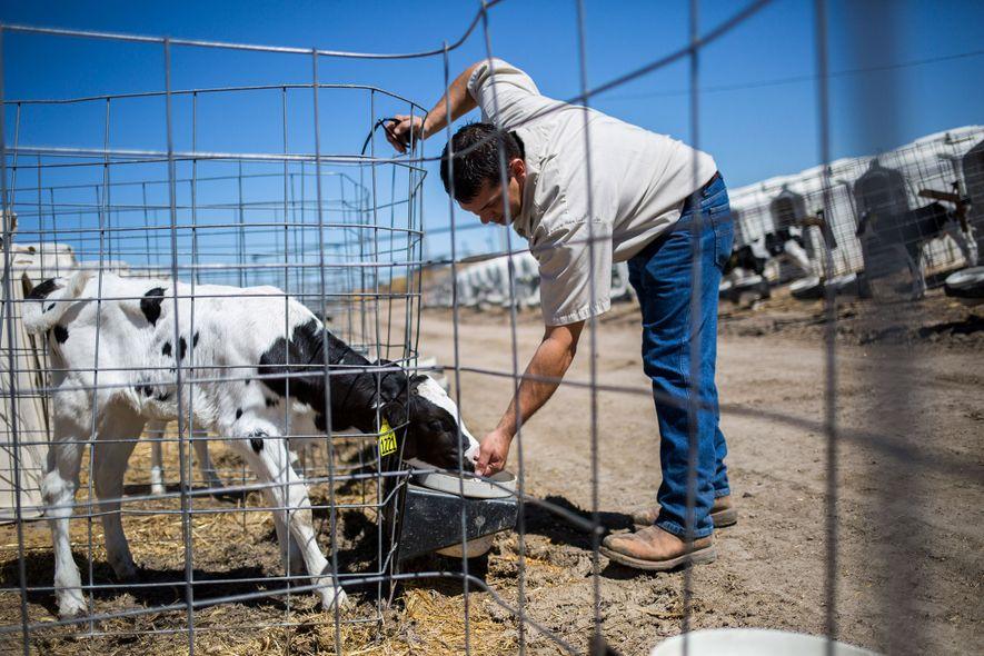 Clay McCarty ist einer der vier Brüder der McCarty Family Farms. Ihr Betrieb in Rexford, Kansas, ist ein Milchlieferant für Danone.
