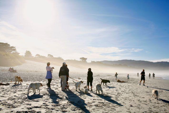 Foto von Menschen und Hunden am Carmel City Beach in Carmel, Kalifornien