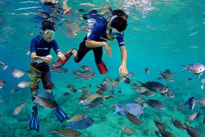 Foto von Schnorchlern mit Fischen am Cas Abao Beach, Curaçao