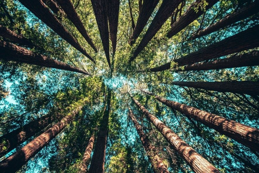 Kurzfristig positiv: Corona-Effekte auf die Umwelt