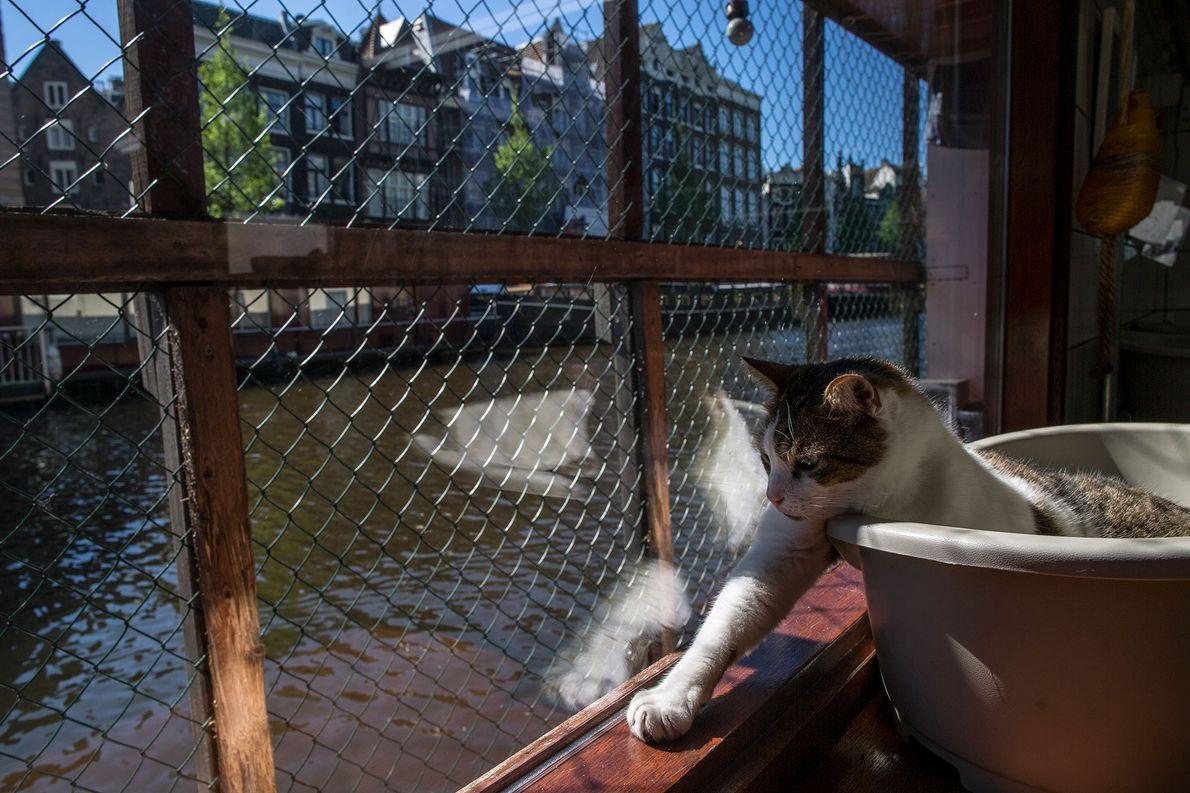 Der acht Jahre alte Kater Icey genießt die Sonne auf dem Deck des Katzenboots.