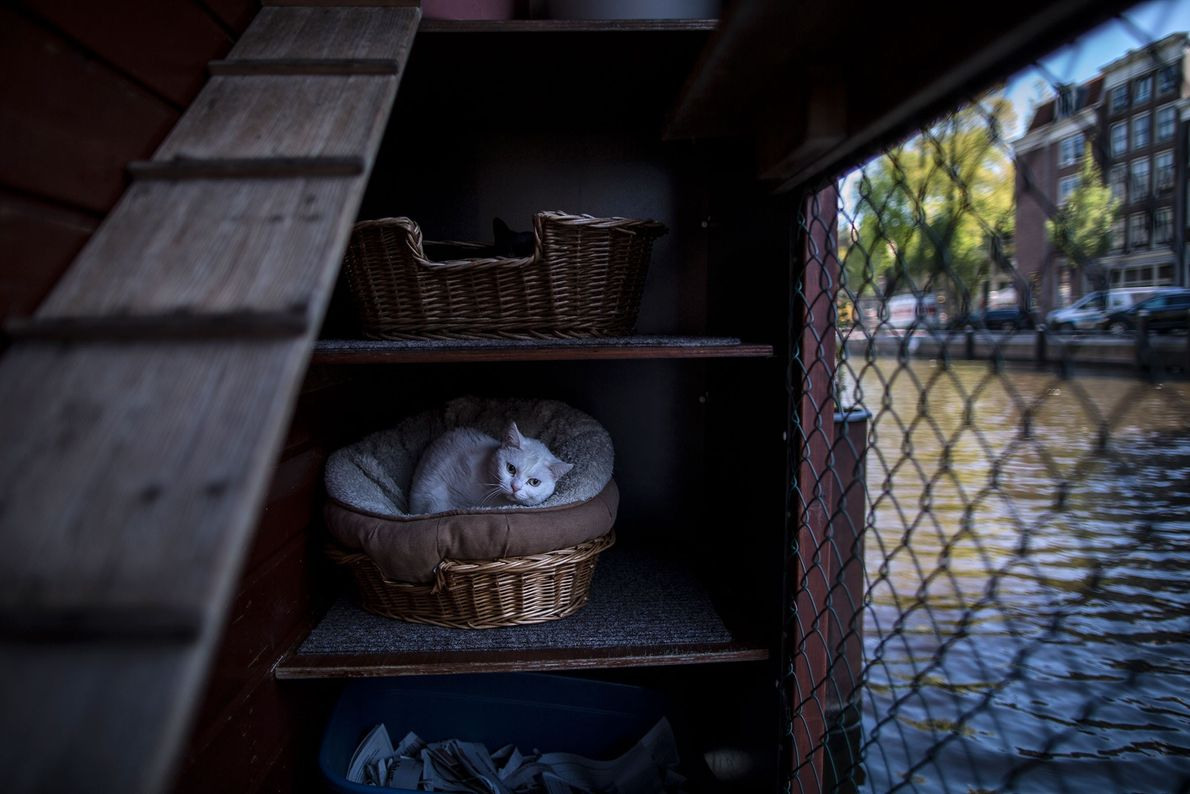 Fibi, ein vier Jahre altes Weibchen, ruht sich in einem Körbchen an Deck aus.