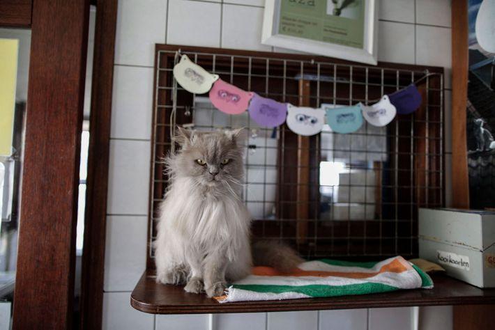 Kasumi wartet darauf, von einem der Freiwilligen gebürstet zu werden.