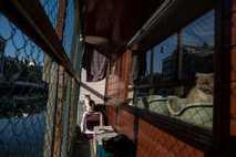 Der neunjährige Kater Borre (links) genießt die Sonne an Deck des Katzenboots, während die zehnjärige Kasumi ...