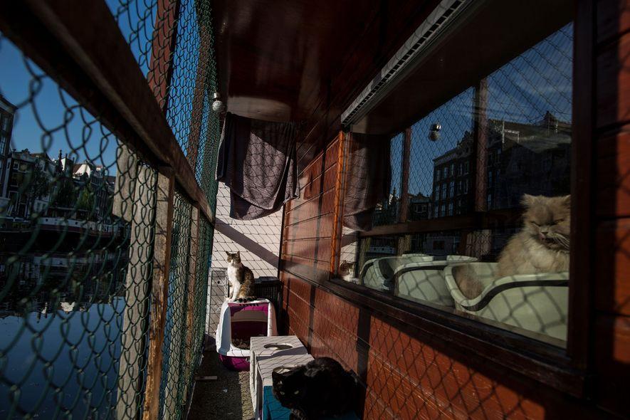 Schwimmendes Tierheim: Willkommen auf dem Katzenboot