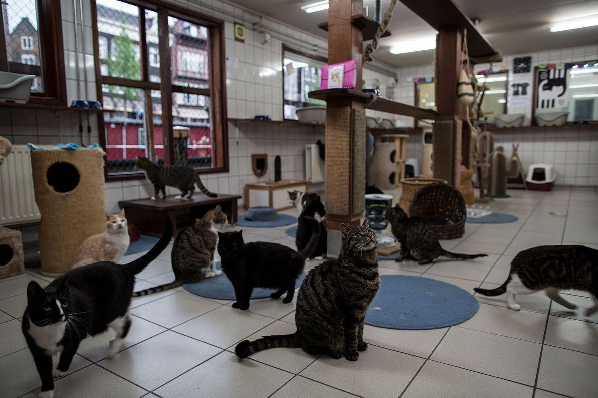 Auf dem Katzenboot ist Fütterungszeit – und die Katzen warten schon.