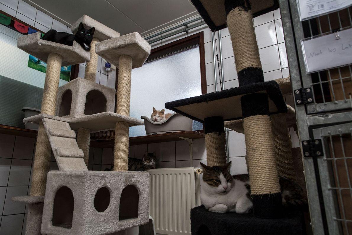 Die vier Jahre alte Katze Suus (oben links), Samus und Borre entspannen sich.