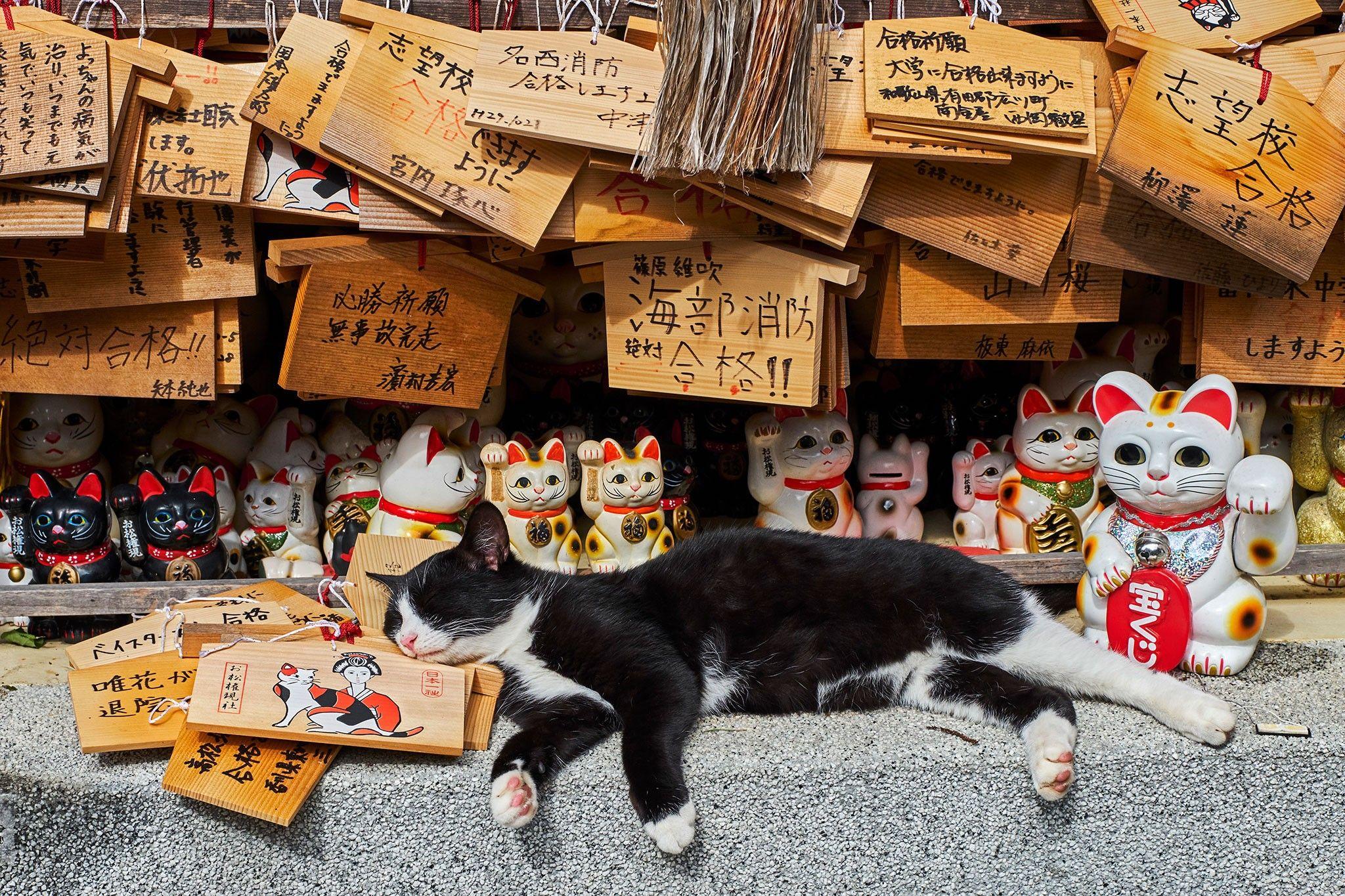 Auf Samtpfoten durch die Welt: Das Leben der Straßenkatzen | National Geographic