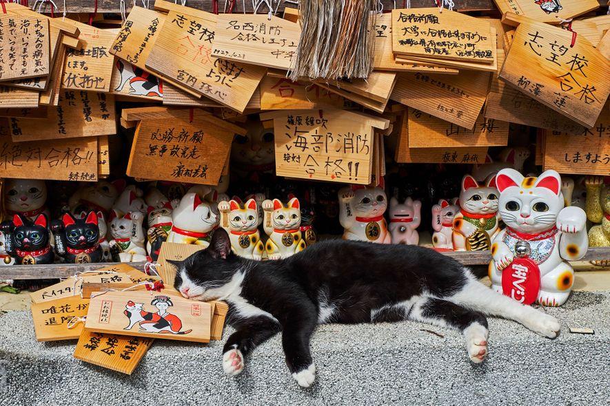Auf Samtpfoten durch die Welt: Das Leben der Straßenkatzen