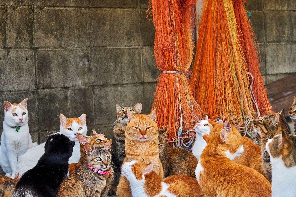 """Diese Stubentiger leben auf einer der fast ein Dutzend """"Katzeninseln"""" Japans. Die Fotografen erzählen, dass japanische …"""