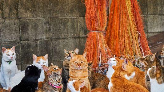 Das Leben der Straßenkatzen