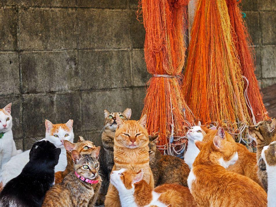 Galerie: Das Leben der Straßenkatzen