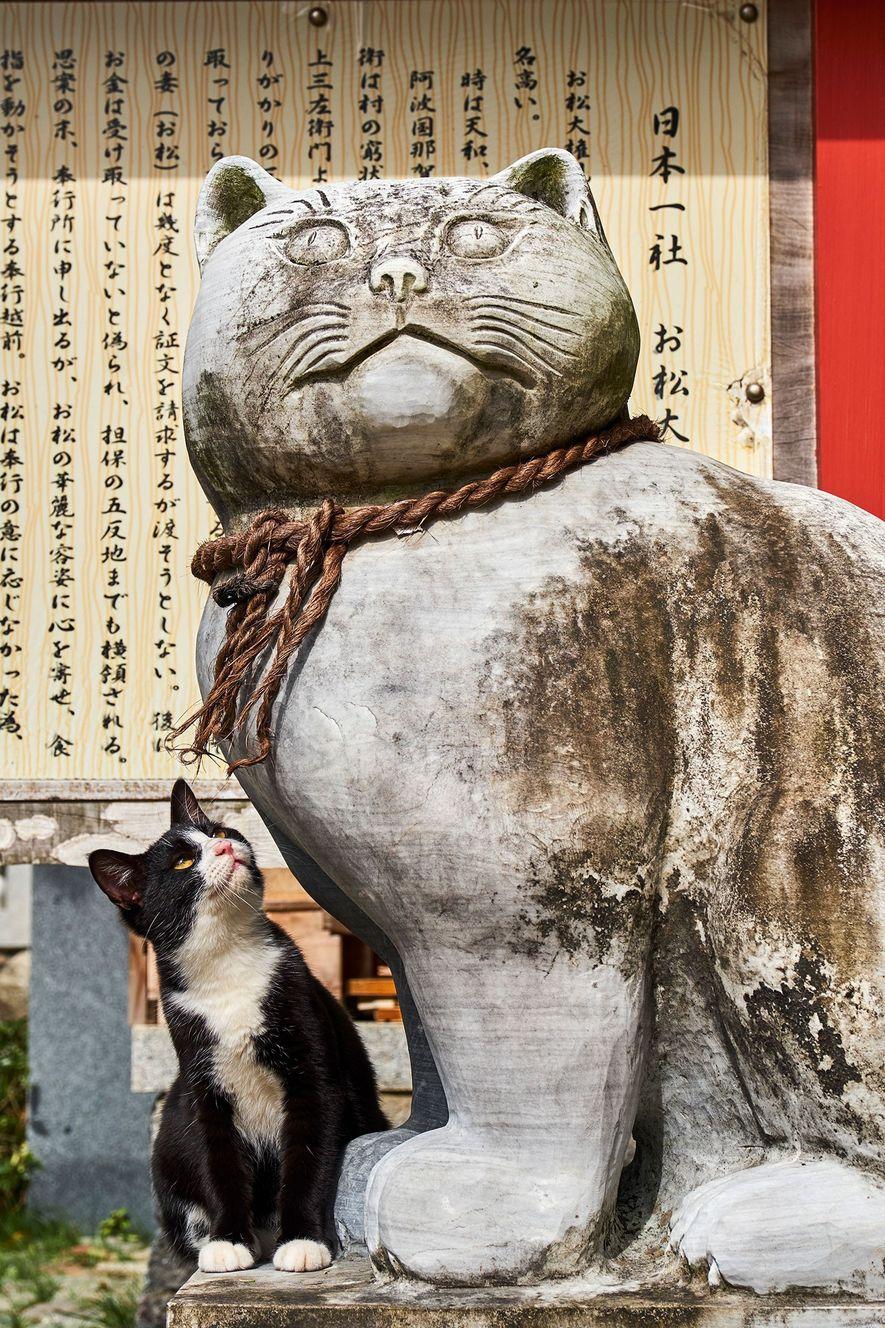 In Tokio gibt es diverse Tempel, die Katzen gewidmet sind. Dort können Besucher nicht nur steinerne Katzenstatuen bewundern, sondern auch echte Stubentiger.