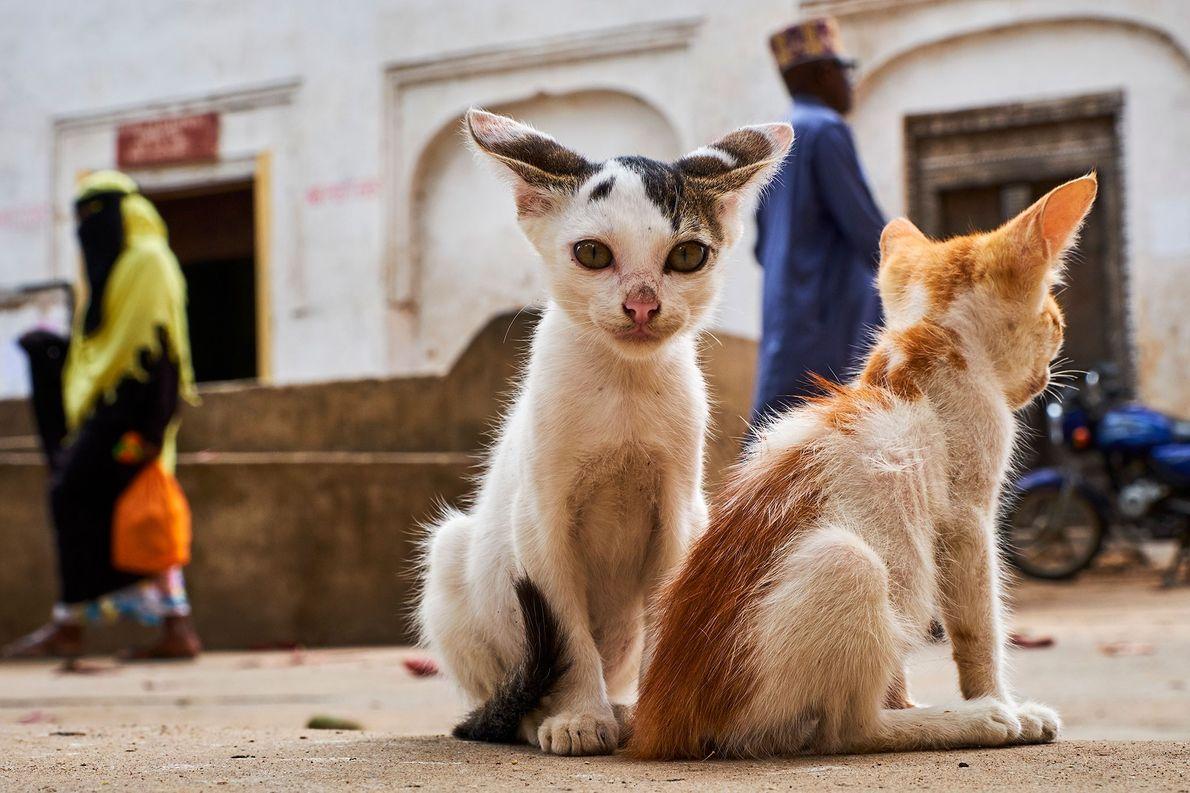 Zwei Kätzchen sitzen in der Altstadt der UNESCO-Welterbestätte Lamu, der ältesten Swahili-Siedlung in Ostafrika. Die Katzen …