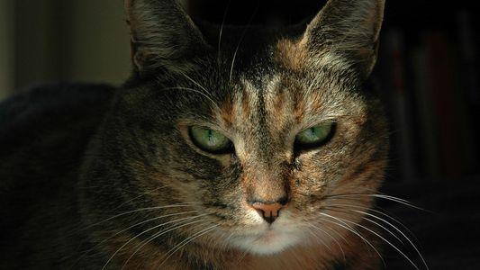 Katzenflüsterer: Wenige Menschen können Katzenmimik entschlüsseln