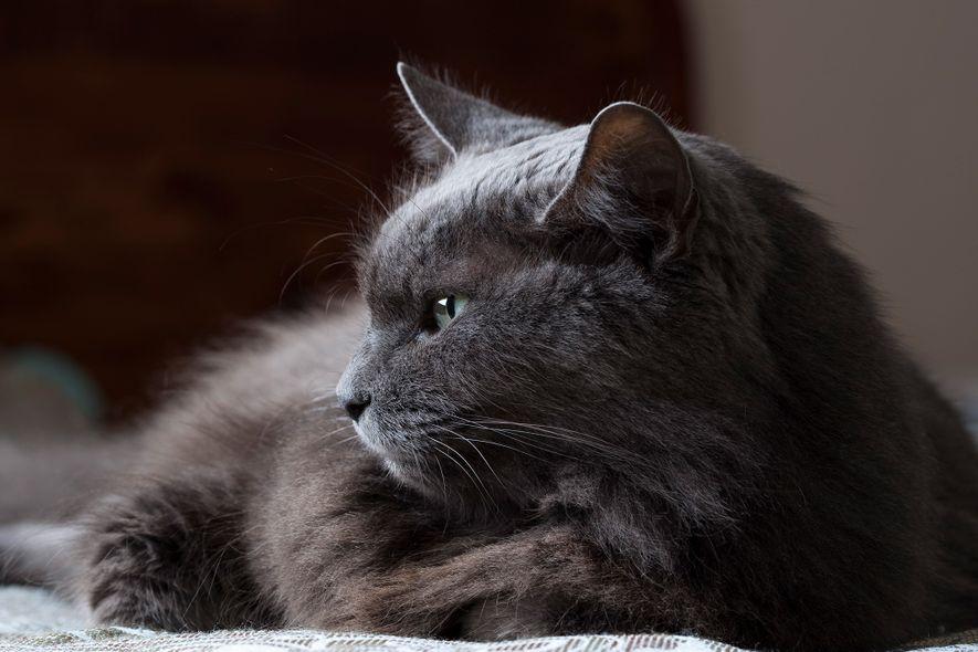 Katzen gelten oft als undurchschaubar, nutzen aber wahrscheinlich subtile Kommunikationsformen, die bisher größtenteils unbeachtet blieben.