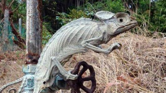 Chamäleon wurde von tropischer Sonne lebendig mumifiziert