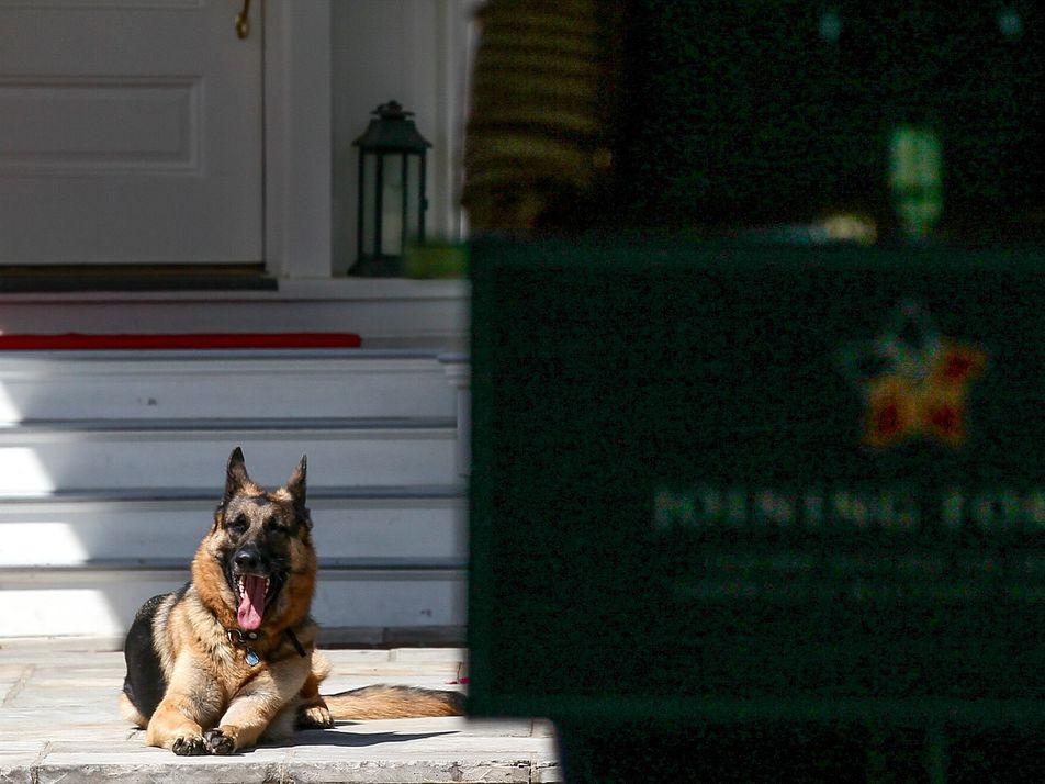 Symbol eines Sinneswandels: Erster Tierheimhund im Weißen Haus