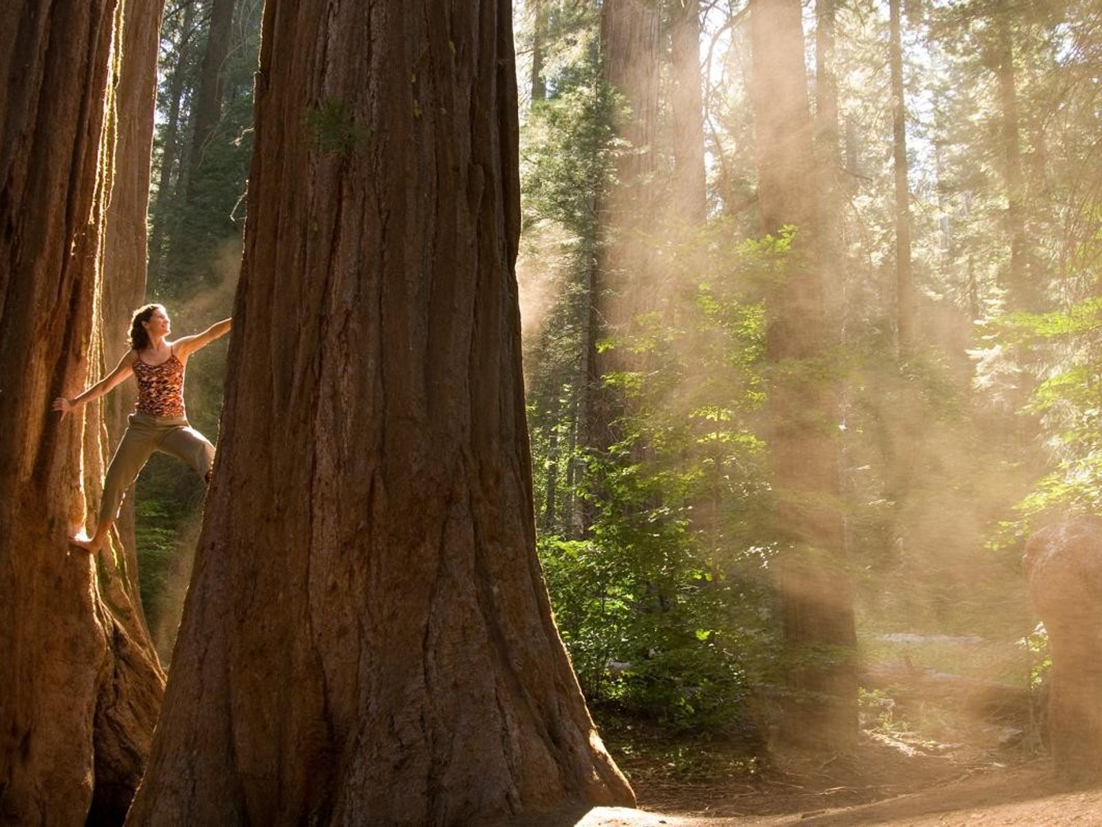 Eine Frau klettert auf einen Baum
