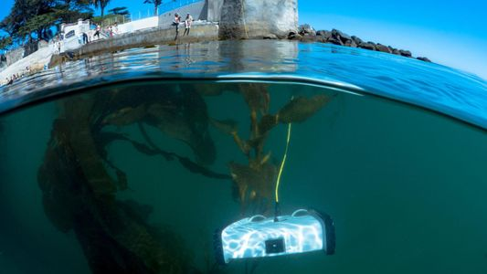 Drohnen helfen Laienwissenschaftlern bei der Rettung des Meeres