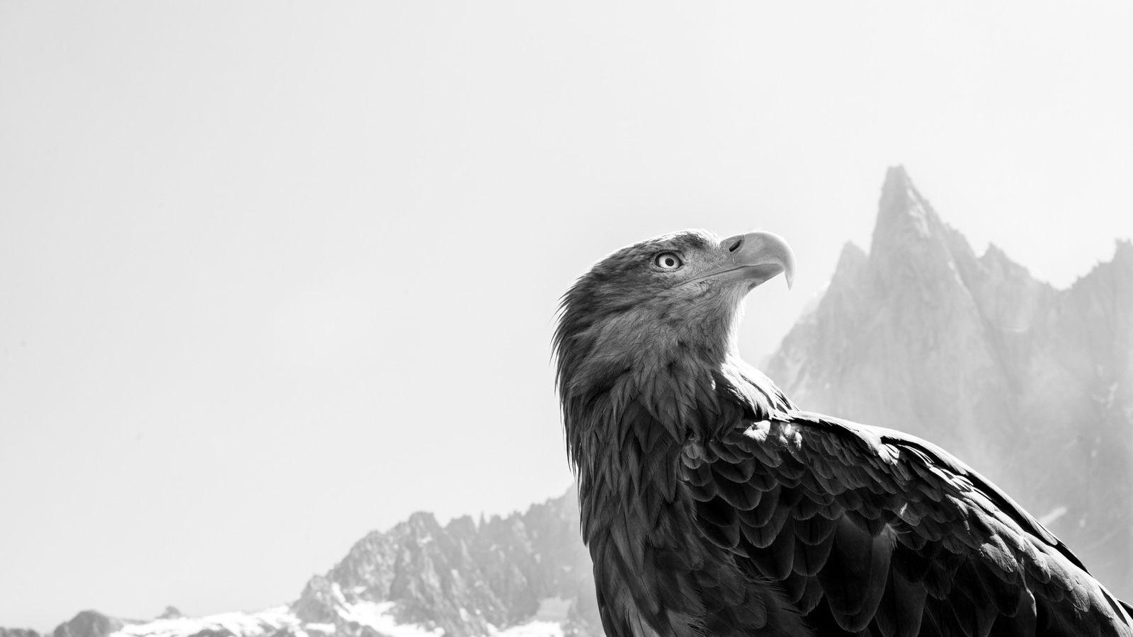 """""""Wir müssen den Blick des Adlers einnehmen, um die richtigen Entscheidungen für die folgenden Generationen zu ..."""