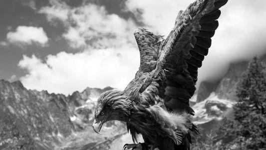 Auf Adlers Schwingen gegen den Klimawandel