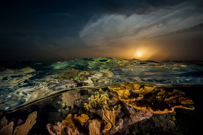 Diese Korallen vor der Südküste Kubas leuchten im Sonnenuntergang. Als Christoph Kolumbus das Naturwunder aus Riffen, ...