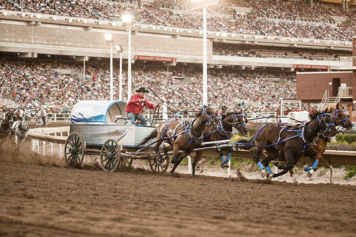 Das Calgary Stempede Festival findet jeden Juli in Calgary statt und begeistert mit Rodeos, Ausstellungen und ...