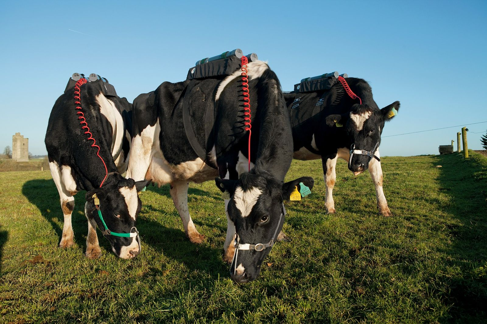 In Fermoy im irischen County Cork wird das Methan gemessen, das Kühe auf einer Weide ausstoßen.