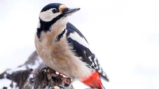 Was sind Deutschlands häufigste Wintervögel?