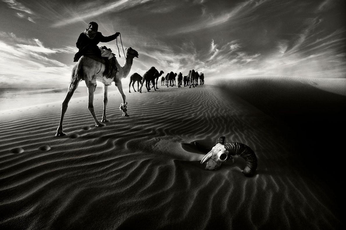 Im Norden Kuwaits ziehen Reisende auf Kamelen an einem Tierschädel in der Wüste vorbei.