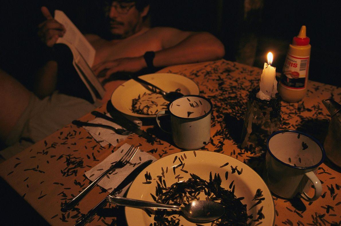 Termiten krabbeln über einen Tisch in einem Vorratszelt im bolivischen Madidi-Nationalpark, während ein Mann daneben ungestört ...