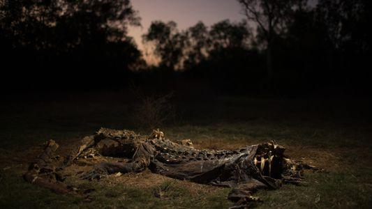 Galerie: Das gefährliche Leben der Krokodiljäger