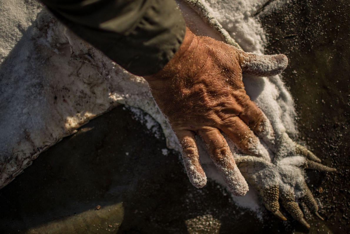 Hand salzt Haut ein
