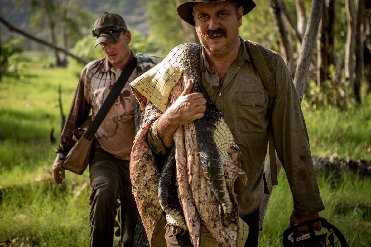 Männer tragen Krokodil
