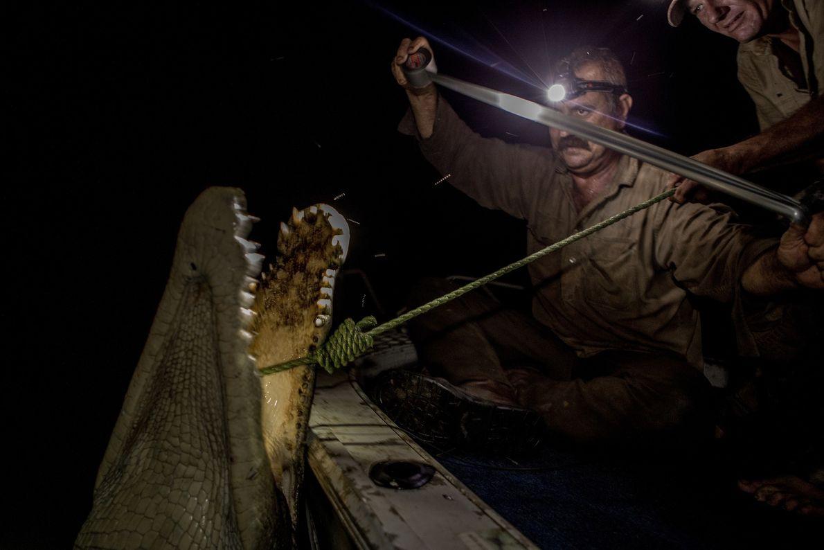 Jäger und Krokodil
