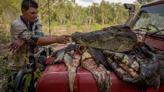 Mann und Krokodilskopf