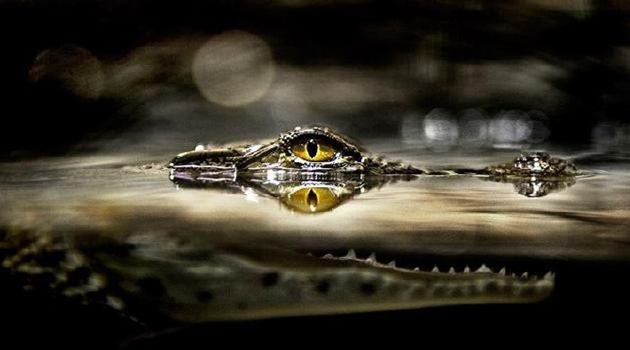 Als die Krokodile herrschten