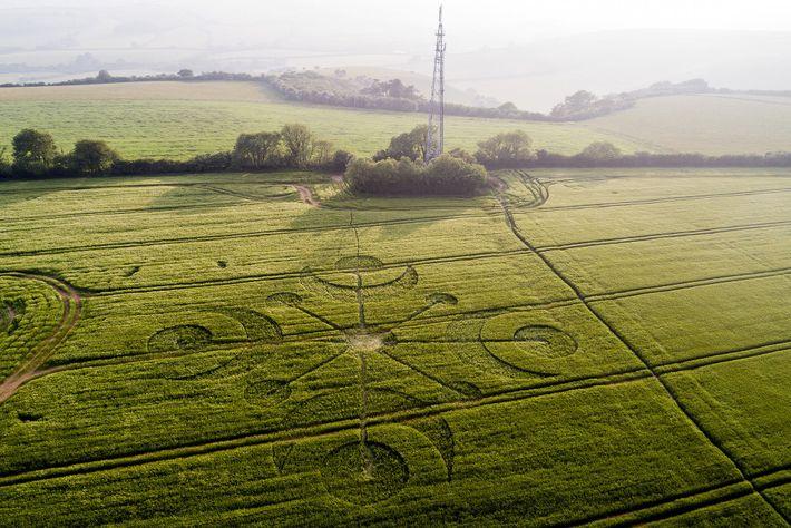 Ein eleganter Kornkreis schmückt ein Feld in der Nähe von Cerne Abbas.