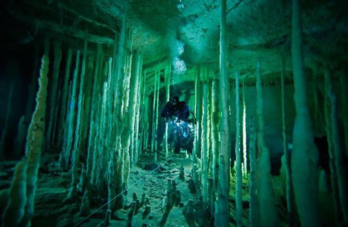 """In """"Dan's Cave"""" auf Abaco bewegt sich diese Taucherin behutsam entlang ihrer Führungsleine durch einen Säulenwald. …"""