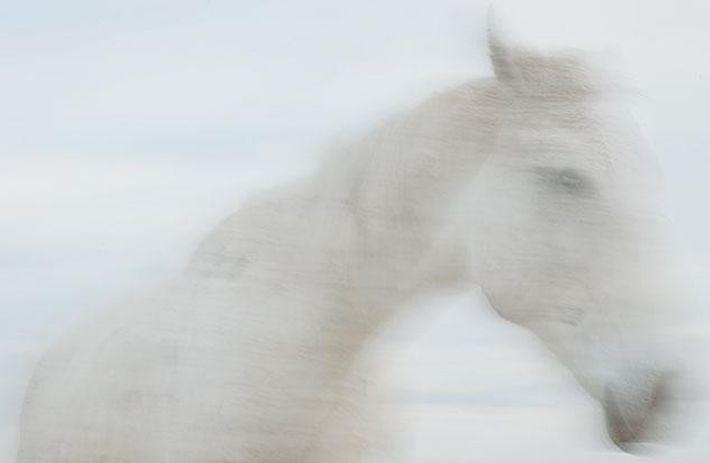 Das Volk der Pferde