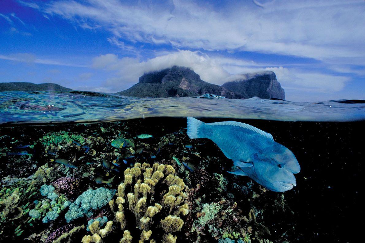 Ausgewaschene Vulkangipfel erheben sich bei Lord Howe Island über dem südlichsten Korallenriff der Welt, in dem ...